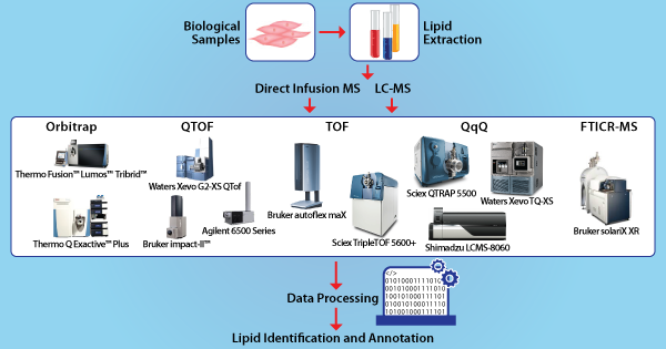 Bioinformatics Tool for Mass Spectrometry Based Lipidomics Workflows